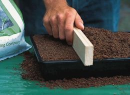 fill the seed tray with compost