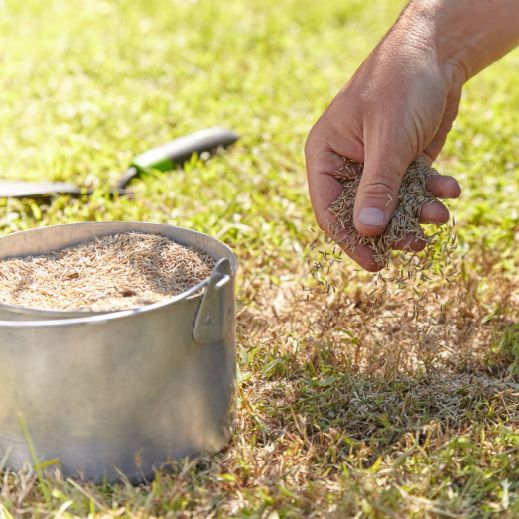 Hand distributing grass seed on lawn