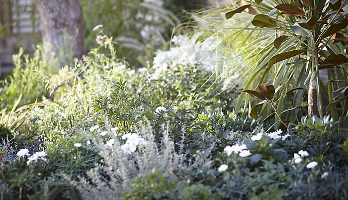 """garden border with shrubs and plants"""