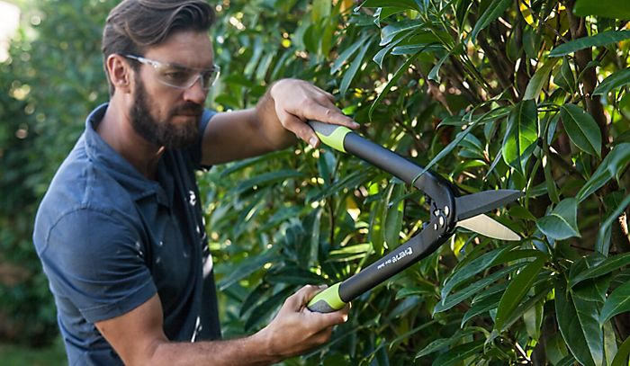 Man in safety glasses pruning hedge