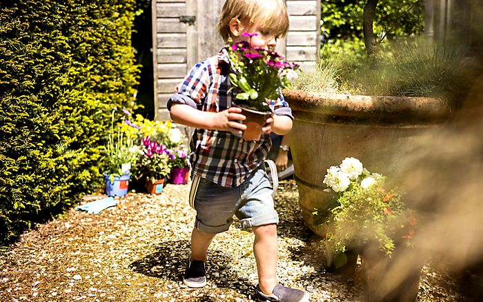 """little boy carrying bedding plant in pot"""