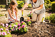 How to prepare the garden for growing plants