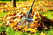 5 Autumn gardening tips