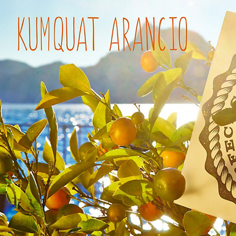 Image of Kumquat Arancio colour
