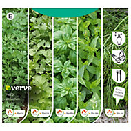 Herb collection Seed