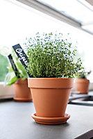 Laleh Terracotta Terracotta Round Plant pot (Dia)17.1cm