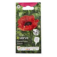 Oriental Poppy Seed
