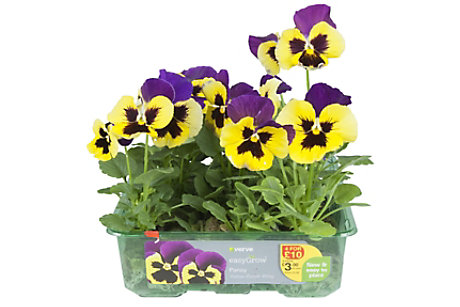 easyGrow bedding plants