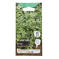 Plain leaved parsley Seed