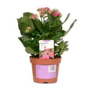 House Plants Gardening