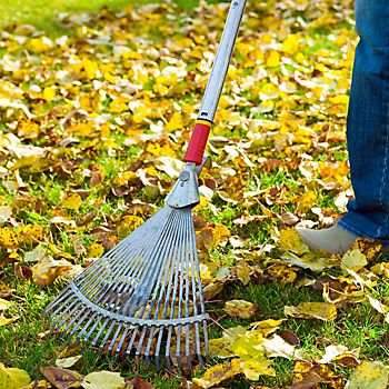 Autumn leaves being cleared with a lawn rake