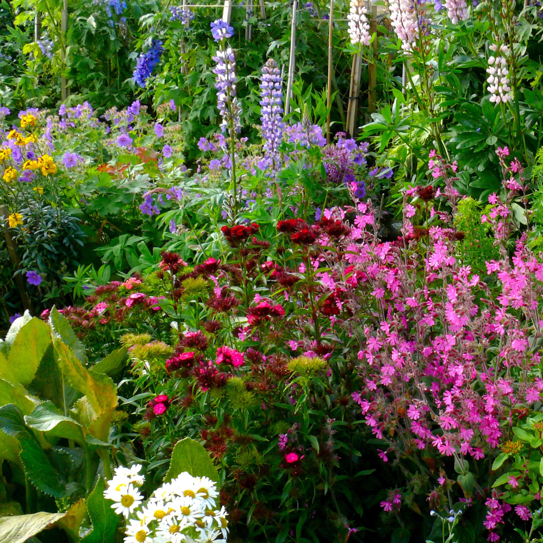 تخت گل رنگارنگ در باغ کلبه