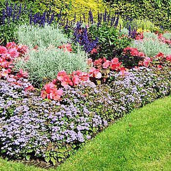 Colourful bedding plants in a classic garden design