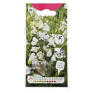 White Sweet pea Seed