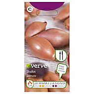 Zebrune Shallot Seed